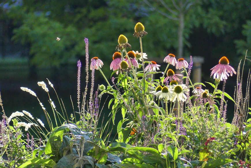 herbstbepflanzung-blumen
